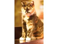 Ivy, a peculiar and gorgeous Tortoiseshell cat is looking for a new home
