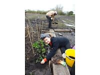 Environmental/Ecology Volunteer Course/class/workshop Wirral