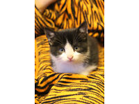 4 beautiful kittens looking for a new home