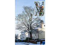 Tree Surgeons - All Aspects Of Tree Care - Residential And Commercial