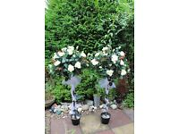 IVORY ROSE WEDDING TREES X 2--WITH LIGHTS AND IVORY SASH