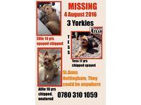 Missing 3 elderly Yorkshire terriers