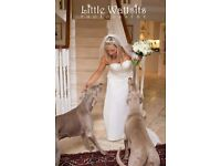Little Weddings -Photography by Little Wattsits