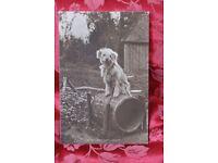 Rare antique print of dog by Judges Ltd
