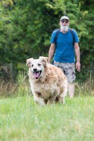 Tony's Dog Walking Services