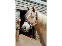Dream Pony for Sale