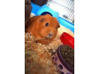 Petsitting service for rabbits, guinea pigs, hamsters, etc.
