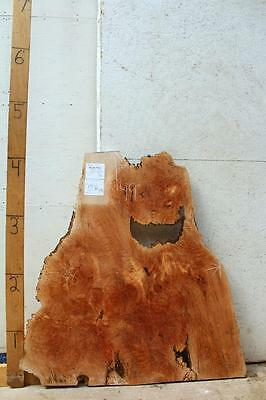 Natural Wood Wall Art Sculpture Live Edge Figured Burl Big Leaf Maple DIY 3936x2](Diy Wood Wall Art)