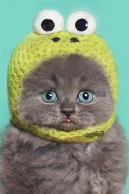 Gray Kitten (Funny Gray Kitten in Green Frog Hat Photo Art Print Poster 24x36)