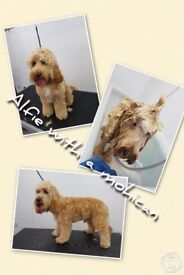 Friendly, Professional Dog Grooming Service in Haverhill