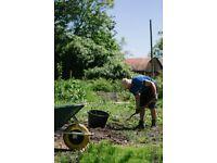 Mike's Garden Maintenance Services