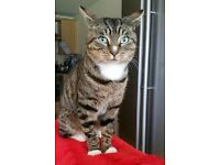 Male Tabby Cat Found Leeds City Centre