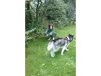 FREE dog sitting or boarding in Bristol/Weston area