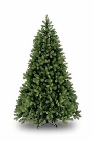 Bayberry spruce Christmas tree 6ft