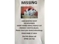 MISSING LOST FEMALE CAT SINCE BONFIRE NIGHT