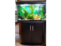 120 LITRE TROPICAL OR COLDWATER AQUARIUM, CABINET AND ACCESSORIES