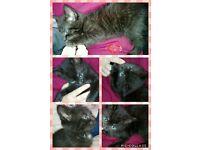 kittens female
