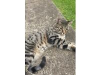 Pet cat missing- please contact if sighted