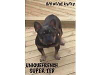 QUALITY FRENCH BULLDOGS K.C REG BOYS&GIRLS!