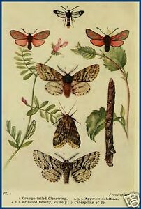12-OLD-BOOKS-CD-MOTHS-of-the-BRITISH-ISLES-BRITISHMOTHS-BOOK-COLLECTION