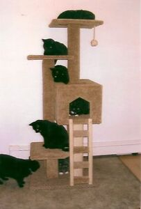 CAT SCRATCHING FURNITURE