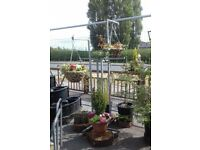 Plants, Planters, Hanging Baskets, Plant Trays, Etc - YARD CLEARANCE