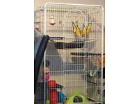Tall Rat cage and 2 male rats
