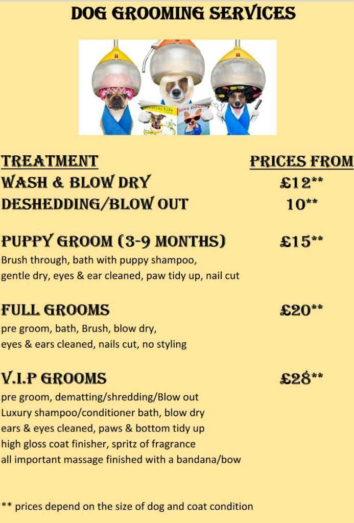 Dog grooming and teeth cleaning   in Kilmarnock, East Ayrshire   Gumtree