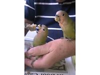 hand tame birds