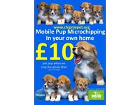 Mobile Pup Microchipping