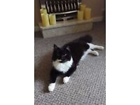 Lost/Possibly Hit & Taken Our Beautiful Monty