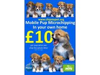 Mobile Pup Microchipping in your home