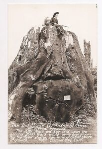 DEL NORTE WONDER TREE STUMP CRESCENT CITY CA.VINTAGE REAL PHOTO POSTCARD