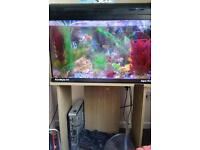 FISH TANK WITH STAND FOR SALE!