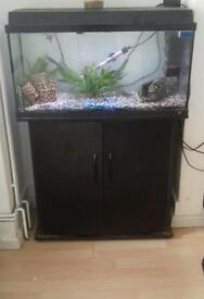 100 litre fish tank