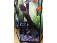 Fish tank with 5 lovely fishs £25