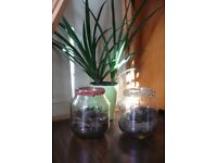 Florarium Succulents and Cacti Plants in a Glass Jar