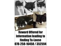 Missing July 2015 Missing black and white male cat , nurtured and chipped