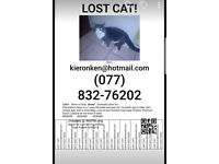 Missing cat grey and white name (boss)