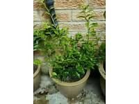 Plants with pots