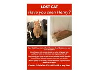 Lost Ginger Cat - Clapton - East London