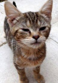 Toby, Oliver, Leo & Tigger, kittens needing loving homes