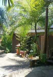 Open Plan Studio for Rent in Sunshine Beach - walk to the beach!! Sunshine Beach Noosa Area Preview