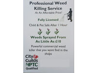 Professional (Affordable) Weed Killing Service