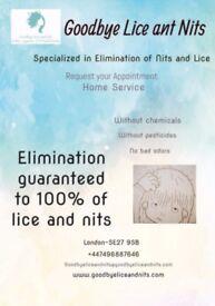 Goodbye lice and nits