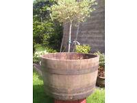 genuine old oak half barrel