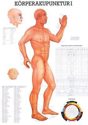 Akupunkturtafel (NEU Lehrtafel, Lehrposter, Poster: Körperakupunktur 1 - laminiert)