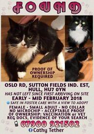 CAT FOUND - Sutton Fields Ind. Est., Hull