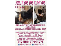 MISSING - VERY SMALL TORTI & WHITE CAT - EAST HULL