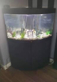 black corner fish tank